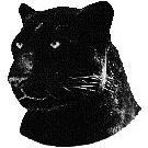 ShadowPanther.net